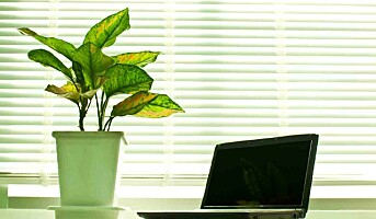 10 planter som renser luften på kontoret