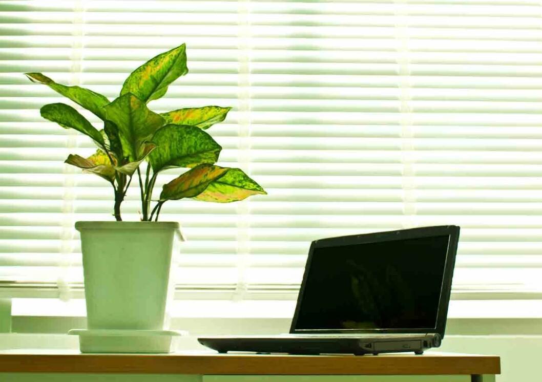 Grønne-planter-på-kontoret-